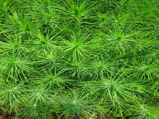松树的种类图片大全;