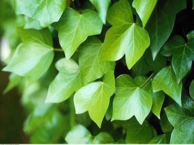 植物叶片表皮结构图