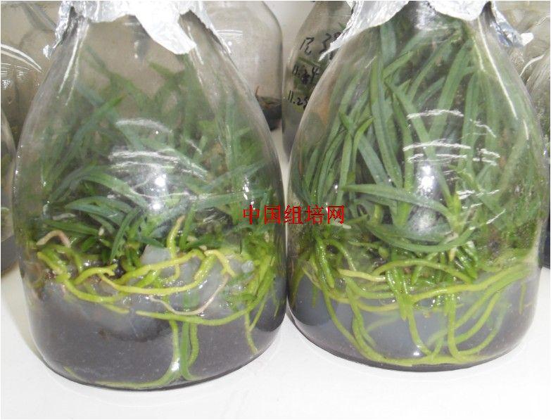 中国组培网-植物组织培养行业门户网站|组培室设计